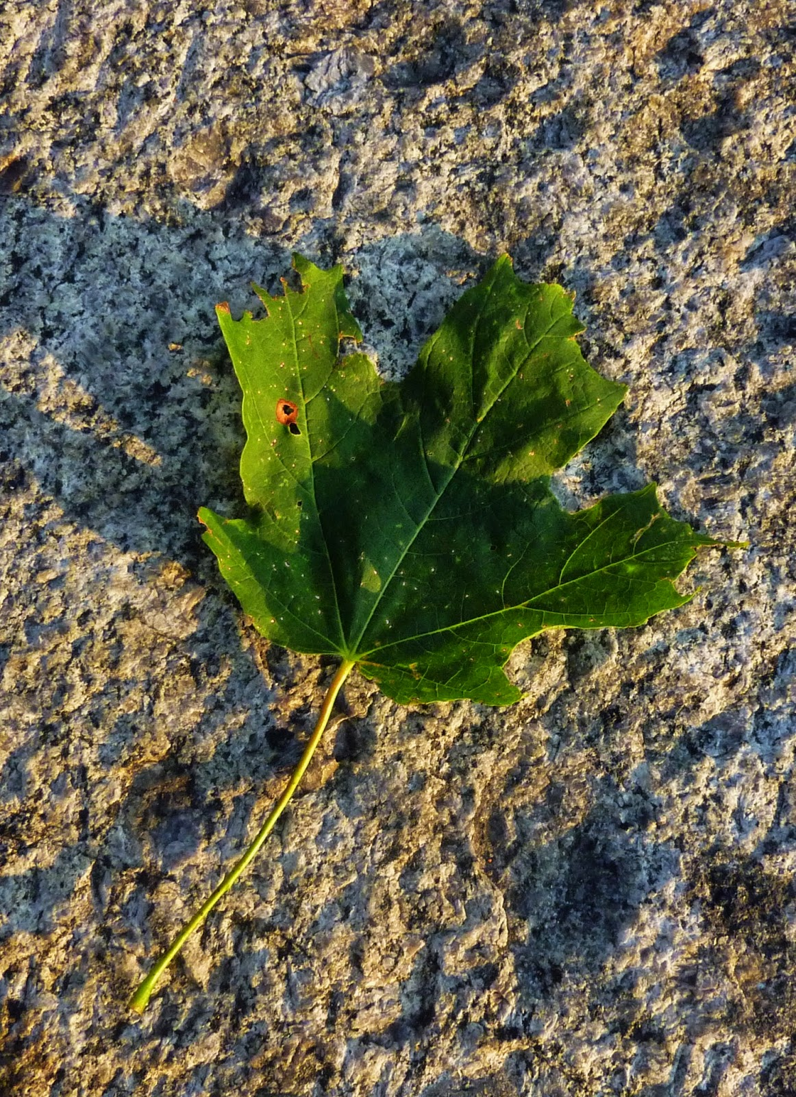 Aventures Canadiennes / Canadian Adventures – Part 1